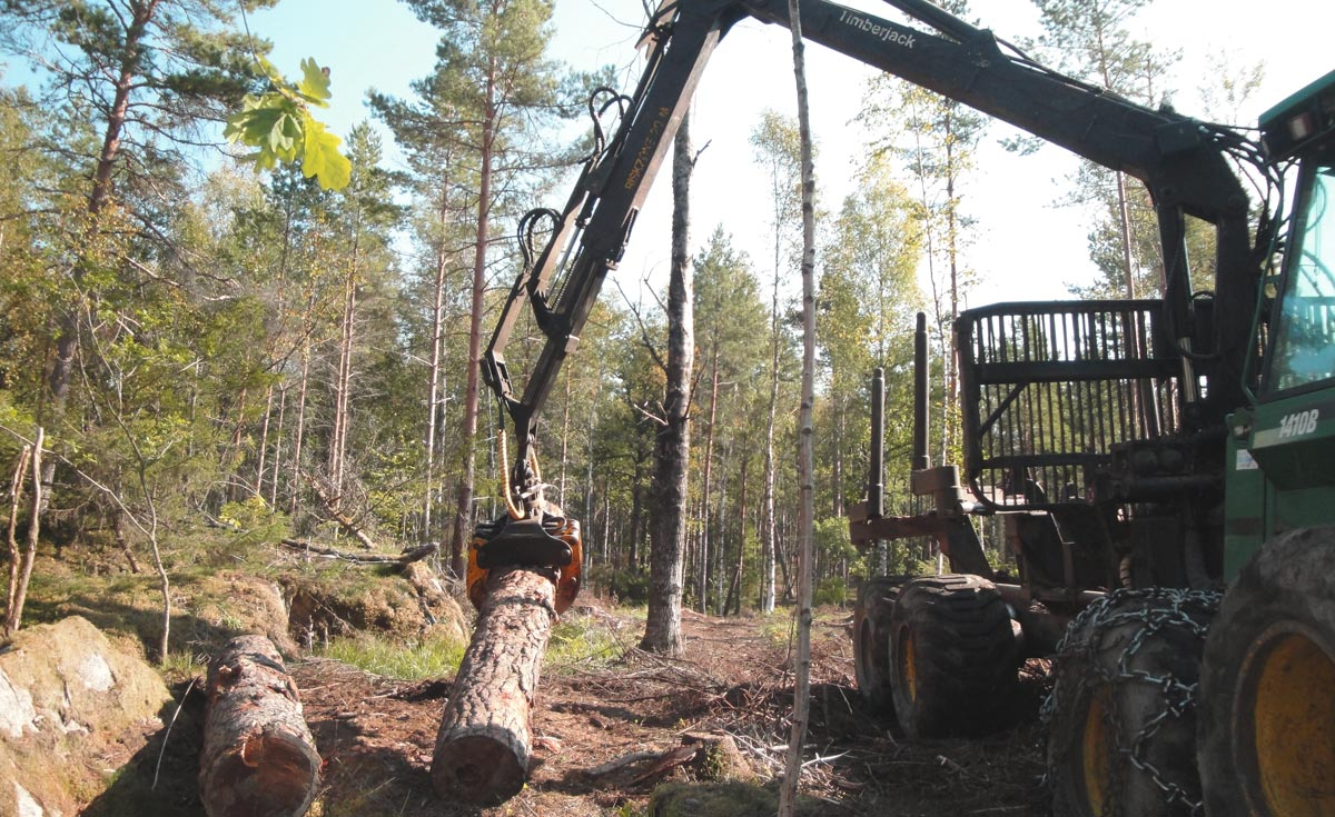 Avverkning av skog i Uppsala eller Stockholm
