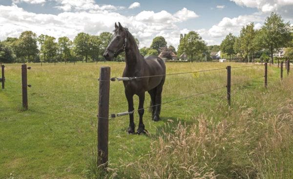 Elstängsel för hästar i Uppsala